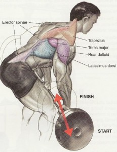 Bent-Over-Barbell-Row-Muscles-Worked-231x300