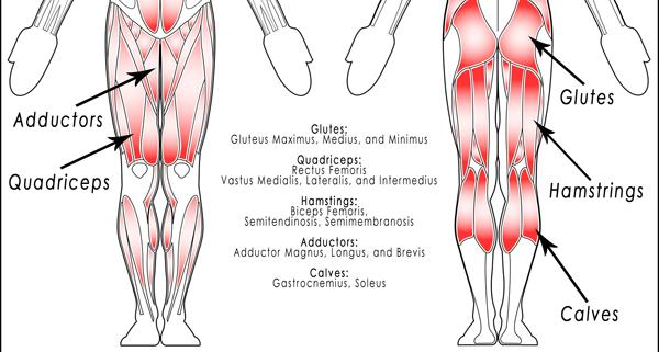 complete-legs